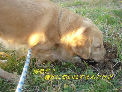 夕方の散歩&ニャンとの会話_f0114128_20263744.jpg