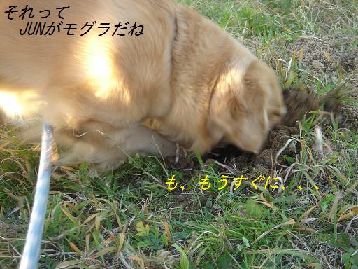 夕方の散歩&ニャンとの会話_f0114128_2028854.jpg