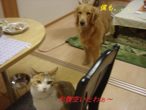 夕方の散歩&ニャンとの会話_f0114128_20412147.jpg