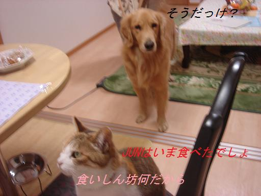 夕方の散歩&ニャンとの会話_f0114128_20443137.jpg