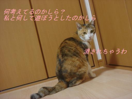 f0114128_20505522.jpg