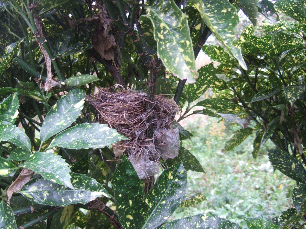 鳥の巣、発見!_c0132732_11105452.jpg