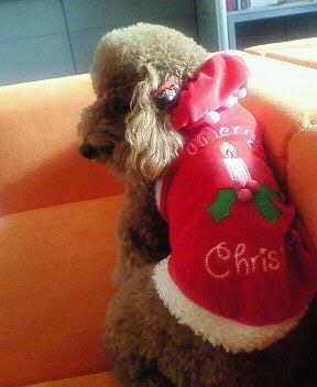 2007.11.28  クリスマスの衣装_a0083571_16145058.jpg
