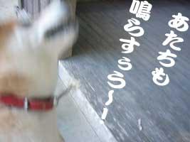 珊瑚のお参り_b0057675_11463053.jpg
