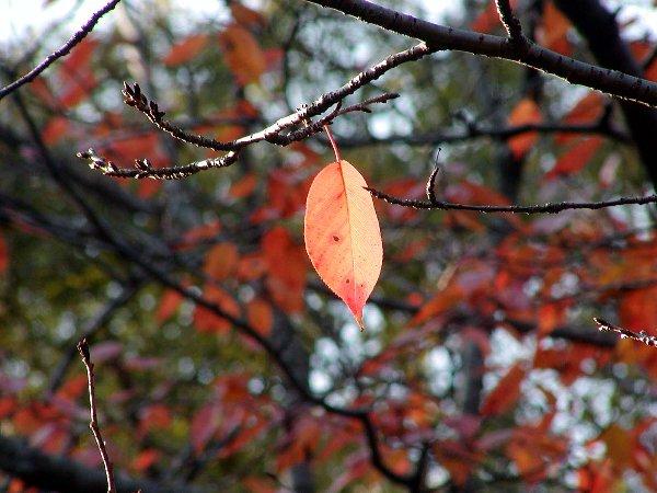 秋の御所 番外編_c0057390_2365682.jpg