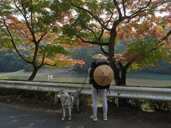 11月15日(木) 秋へんろ第3日め_c0049299_20534526.jpg
