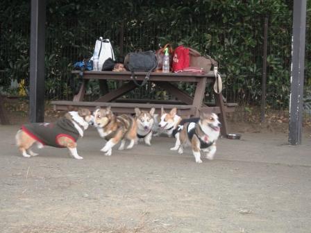 紅葉見★ナイト ~武蔵丘陵森林公園①_f0155118_0383929.jpg
