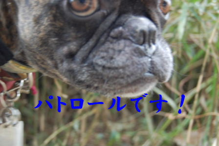 c0130324_01453.jpg