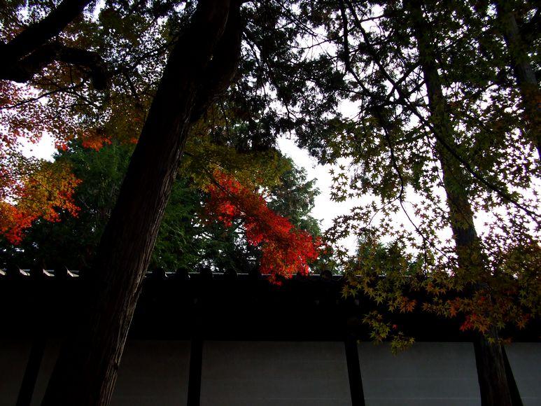 「紅葉の東福寺・・・Ⅱ」_d0133024_9584750.jpg