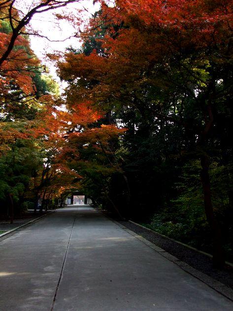 「紅葉の東福寺・・・Ⅱ」_d0133024_9594555.jpg