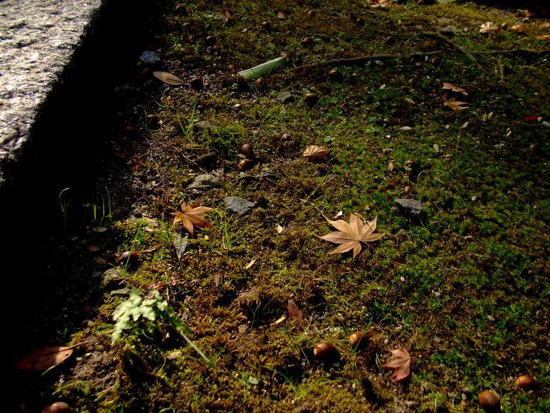 「紅葉の東福寺・・・Ⅱ」_d0133024_959893.jpg