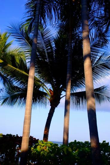 熱帯植物園 オフィウス島_f0050534_7231342.jpg
