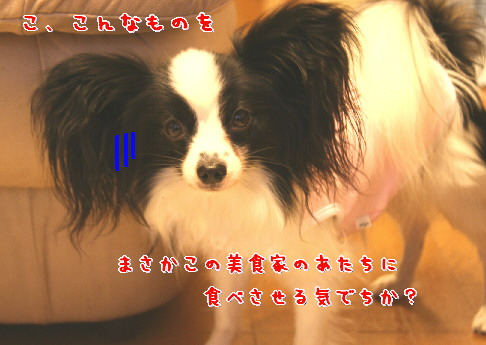 d0013149_033652.jpg