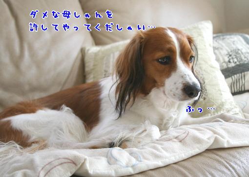 d0013149_057493.jpg