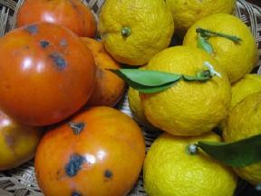 柚子と柿_d0034659_9284754.jpg