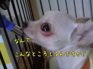 c0081276_17342683.jpg