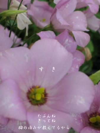 f0156895_0151319.jpg