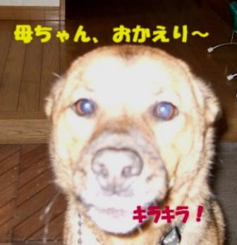 b0087400_22483152.jpg