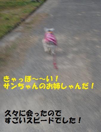 c0098501_17334533.jpg