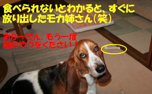 f0121712_1650462.jpg
