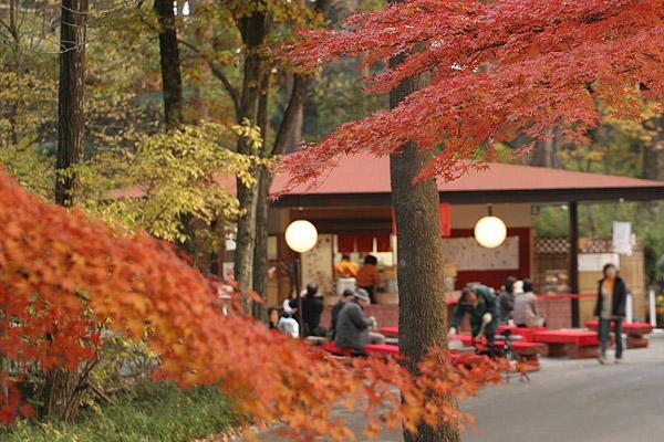 森林公園_d0026817_1421366.jpg
