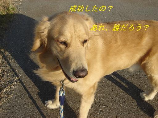 11月30日晴れ_f0114128_21431633.jpg