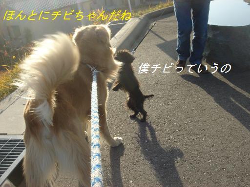11月30日晴れ_f0114128_21451955.jpg