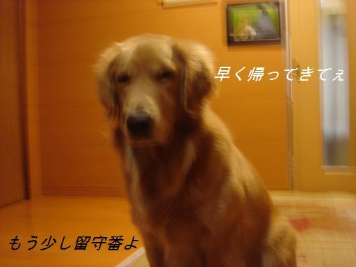 11月30日晴れ_f0114128_2149287.jpg