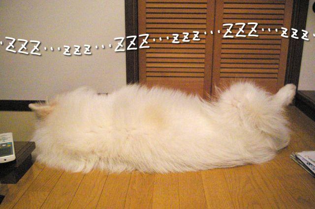 寝起きの悪い犬_c0062832_17191691.jpg