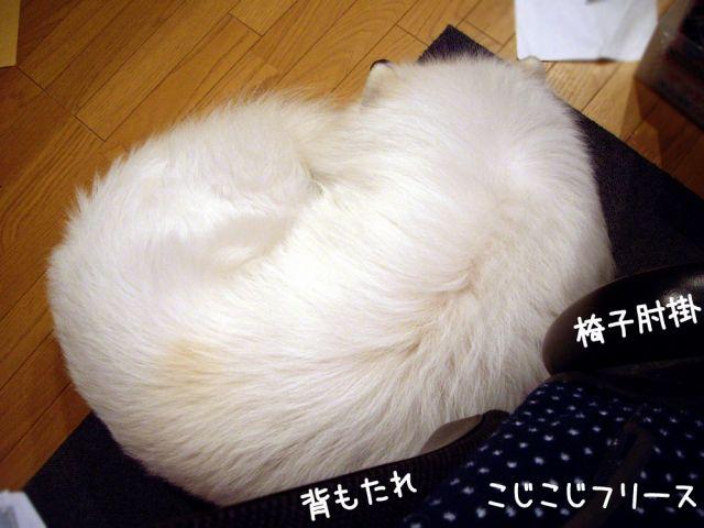 寝起きの悪い犬_c0062832_17194020.jpg