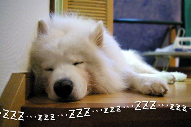 寝起きの悪い犬_c0062832_1719876.jpg