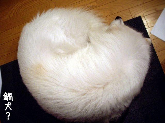 寝起きの悪い犬_c0062832_1720954.jpg