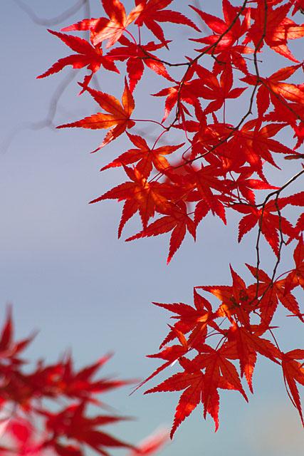 秋の三湖物語 ~紅葉編 1~_c0067040_22254162.jpg