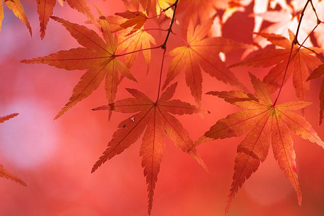 秋の三湖物語 ~紅葉編 1~_c0067040_22332418.jpg