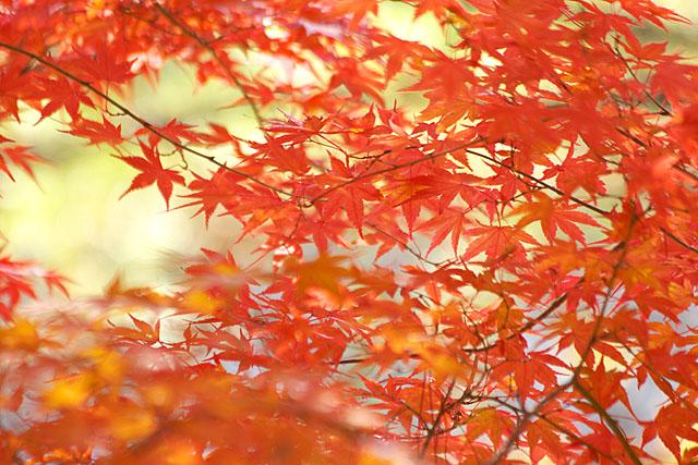 秋の三湖物語 ~紅葉編 1~_c0067040_2233444.jpg