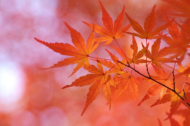 秋の三湖物語 ~紅葉編 1~_c0067040_22353010.jpg