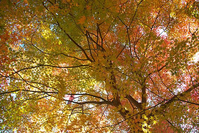 秋の三湖物語 ~紅葉編 1~_c0067040_22372695.jpg