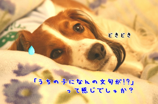 d0013149_0354319.jpg