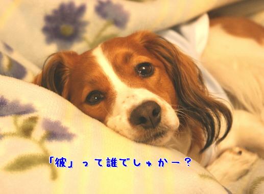 d0013149_085538.jpg
