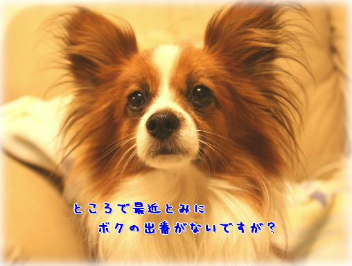 d0013149_114498.jpg