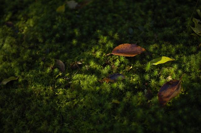 歩道以外には青々とした苔で地面が埋め尽くされていました。ちょっぴり赤く染まった朝日と落ち葉が地面の緑色にまざり夏のような雰囲気でした。