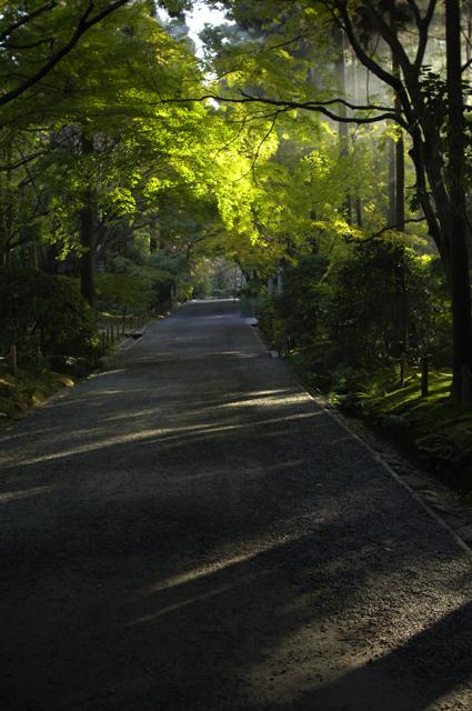 今度は公園内の歩道を小高い所から撮ってみました。もみじの木が両側にありますが、まだ紅葉してません。でも、朝日がもみじをすり抜け歩道に射し込んでます。やっぱり初夏の京都みたいな雰囲気です。ここから少し外れた所では紅葉していた所もあるので次回はそちらを載せてみます。