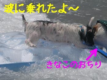 f0055395_1659207.jpg
