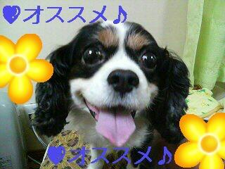 f0059616_019326.jpg
