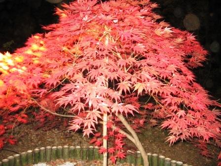 紅葉見★ナイト ~武蔵丘陵森林公園②_f0155118_22271374.jpg