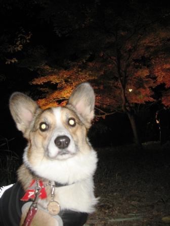 紅葉見★ナイト ~武蔵丘陵森林公園②_f0155118_22315294.jpg