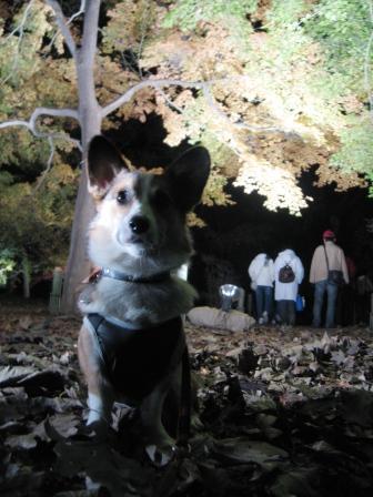 紅葉見★ナイト ~武蔵丘陵森林公園②_f0155118_2232173.jpg