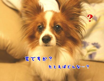 d0013149_0364893.jpg