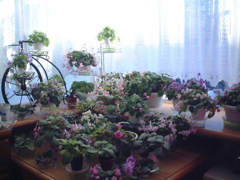 お花が満開_f0135269_6214444.jpg
