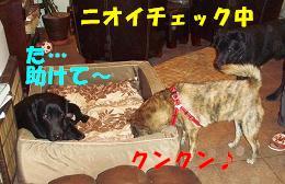 b0003270_16334426.jpg